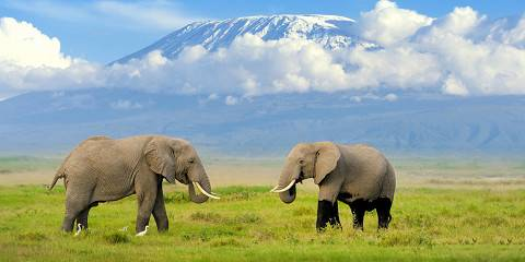 7-Day Best of Kenya Budget Safari 2021-2022