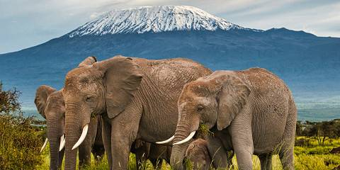 3-Day Amboseli Fly In