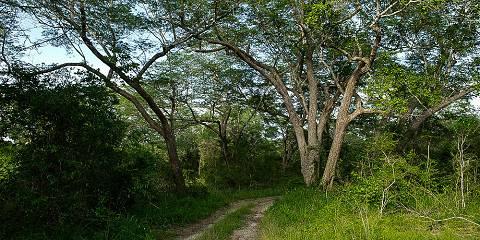 4-Day Tarangire, Serengeti NP & Ngorongoro Crater