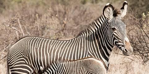 6-Day Itinerary from Nairobi-Maasai Mara-Nakuru-Amboseli