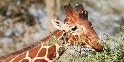 9-Day Safari Twiga