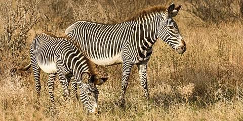 3-Day Samburu Economical Private Safari