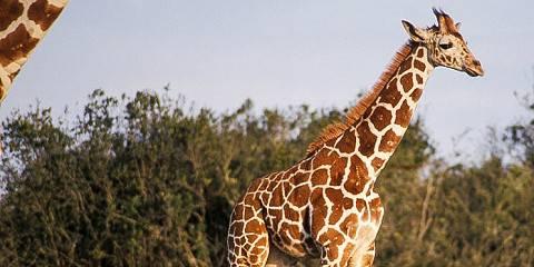 3-Day Maasai Mara Trip