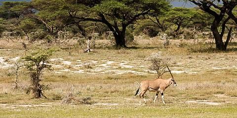 3-Day Meru National Park - Kenya