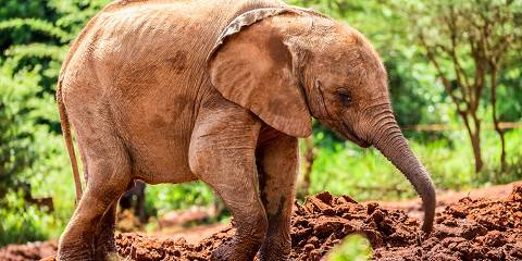 12-Day Fascinating Kenya Midrange Safari