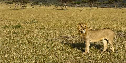 10-Day Kenya Wildlife Circuit Zones-Safari Minivan