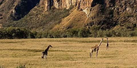 7-Day Wildebeest Migration Kenya Safari Excursion