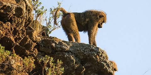 12-Day Discover Samburu, Nakuru, Masai Mara & Diani Beach