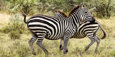 3-Day Masai Mara Group Camping Safari