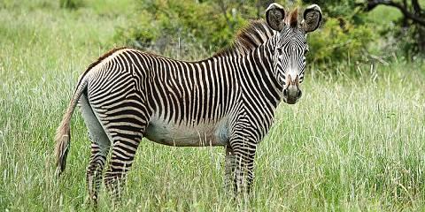 3-Day Elephant Safari Amboseli