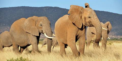 7-Day Masai Mara, Nakuru, Amboseli, & Tsavo West Safari