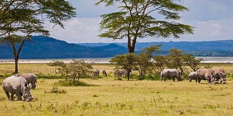 8-Day Samburu, Aberdares, Nakuru & Masai Mara Reserve