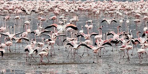 8-Day Western Kenya Circuit Safari
