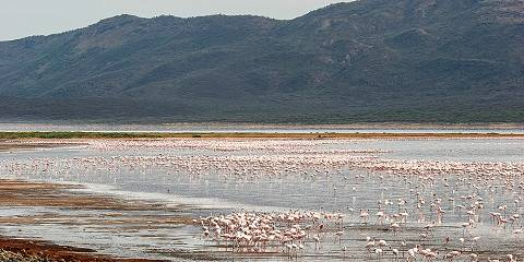 7-Day Mara Nakuru Amboseli Tsavo West End Mombasa