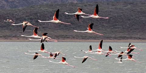 5-Day Masai Mara-Nakuru-Naivasha Budget Group Safari