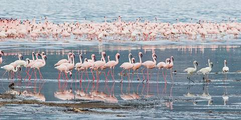 12-Day Kenya Classic Signature Wildlife Safari
