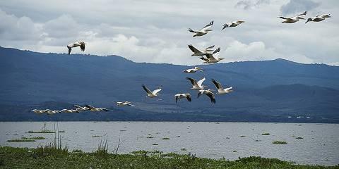 12-Day Riftvalley Lakes, Masai Mara, Amboseli and Tsavo