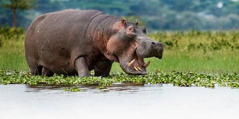 8-Day Special Budget Safari