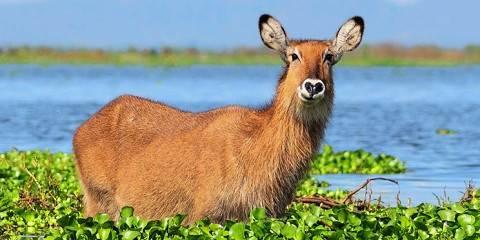4-Day Lake Nakuru and Maasai Mara Private Safari