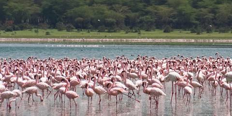 5-Day Classic Wilderness Lake Nakuru-Naivasha-Masai Mara