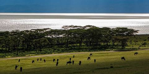 3-Day Jambo Mara Safari Experience with Jadi Safari