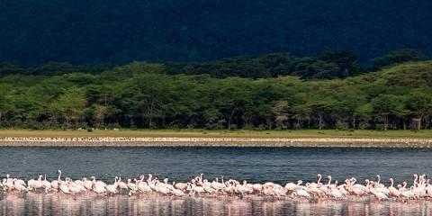 5-Day 4 Nights Aberdare/Lake Nakuru/Maasai Mara