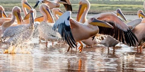 4-Day Masai Mara & Naivasha Economical Private Safari
