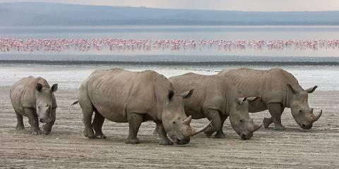 13-Day Kenya & Tanzania Wonders of the World Adventure