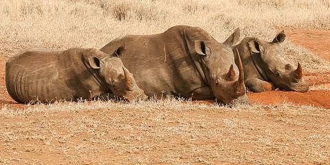 5-Day Rhino Safari