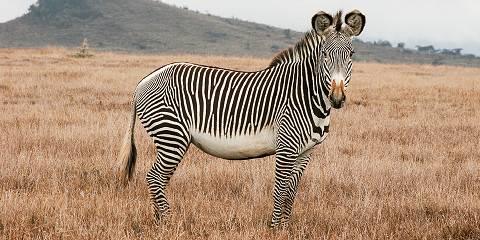 9-Day Amboseli, Tsavo National Park, Diani Beach Holiday