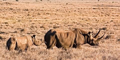 5-Day Masai Mara, Nakuru & Naivasha - Van - Standard