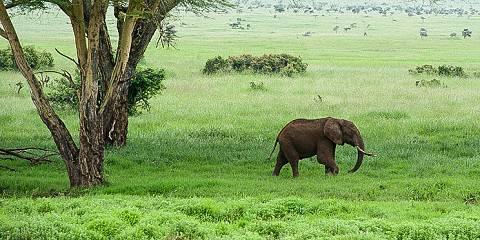 6-Day Masai Mara, Lake Nakuru and Amboseli Great Safari