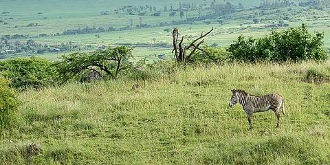 10-Day Kenya Honeymoon Safari in Pop-up Van