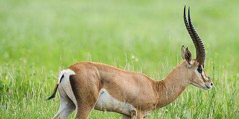 2-Day Affordable Masai Mara Budget Safari (Private)