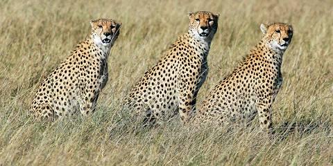 7-Day Mid-Range Famous Serengeti National Park, Safari