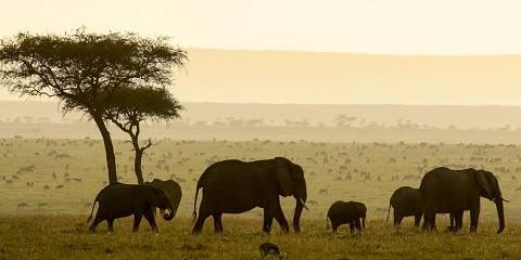 8-Day Maasai Mara and Serengeti National Park by Air