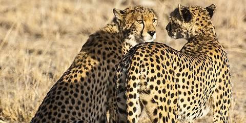 6-Day Masai Mara Nakuru Samburu
