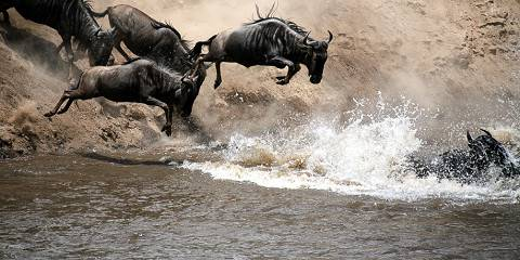 15-Day Rustic Kenya Wildlife and Beach Safari