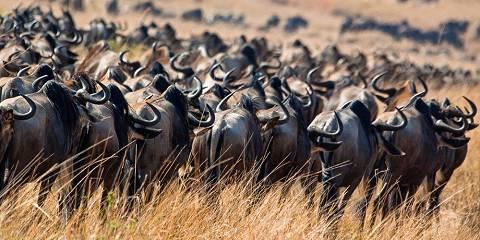 3-Day Masai Mara Private mid-Range Safari