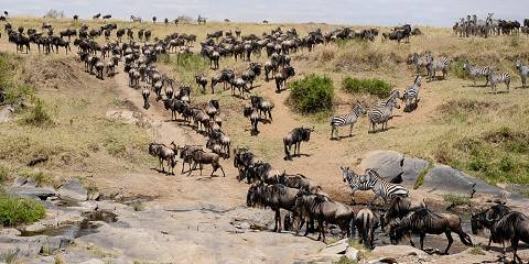 8-Day Big 5 & Great Migration Tanzania Mid-Range Safari