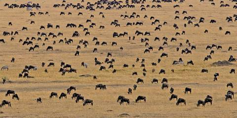 7-Day Tanzania Great Migration Safari
