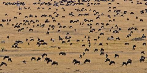 3-Day Masai Mara Safari Wildebeest Migration-Kenya