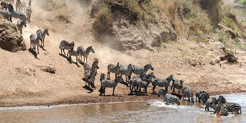 3-Day Masai Mara Wildebeest Migration Last Minute Deal