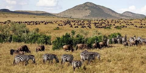 3-Day On Safari Masai Mara Kenya