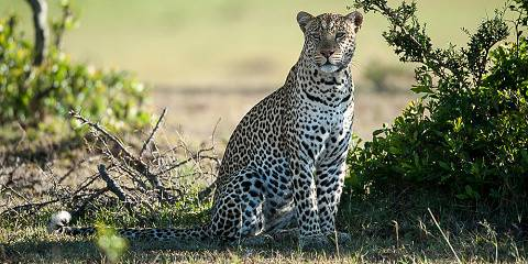5-Day Wildlife Footsteps Safari