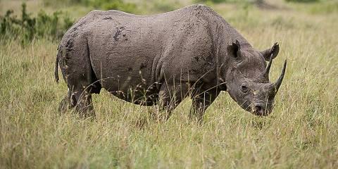 6-Day Born Free Safari