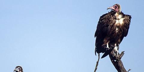 8-Day Amboseli Lake Nakuru Masai Mara Safari