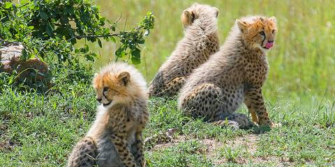 10-Day Big Five Safari