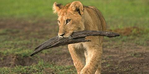 3-Day Queen Elizabeth National Park Experience