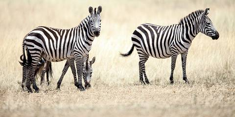 3-Day Lewa Wildlife Conservancy Flight Package Tour